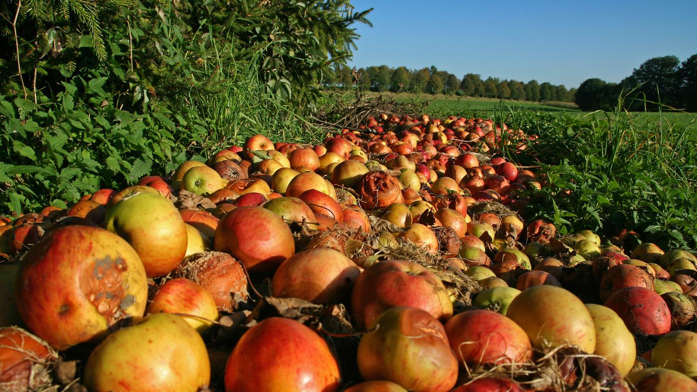 Fruit Production For The Home Gardener