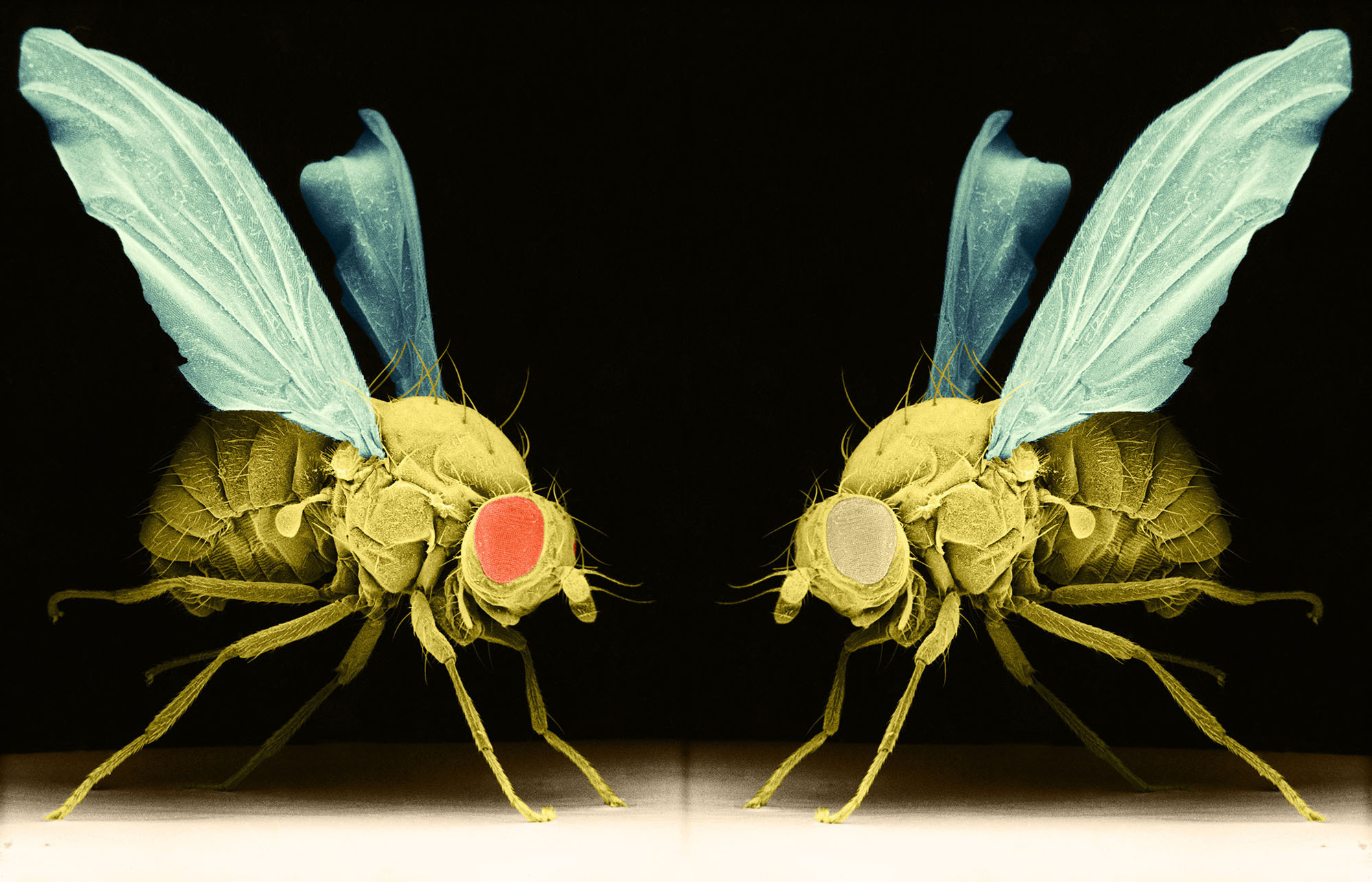 How Research On Sleepless Fruit Flies Could Help Human Insomniacs