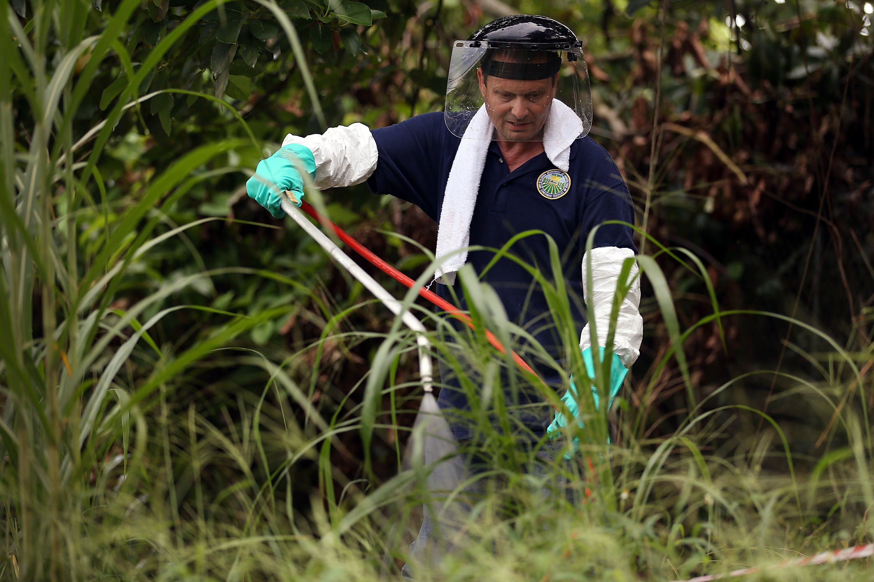 This Pest Has Shut Down South Florida's $700 Million Fruit Industry