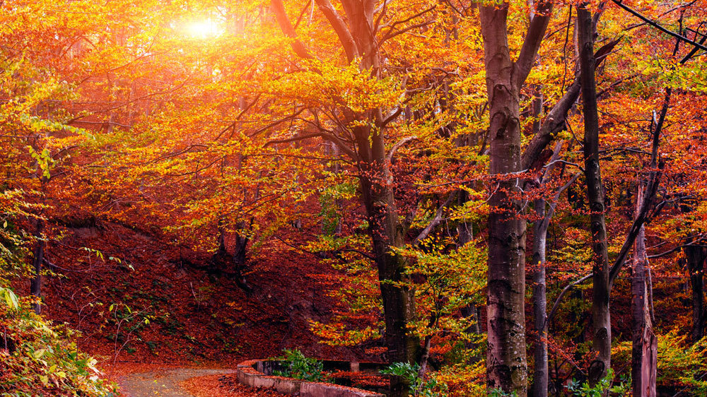 Autumn Serenade: The Fall Music Puzzler : All Songs Considered : NPR