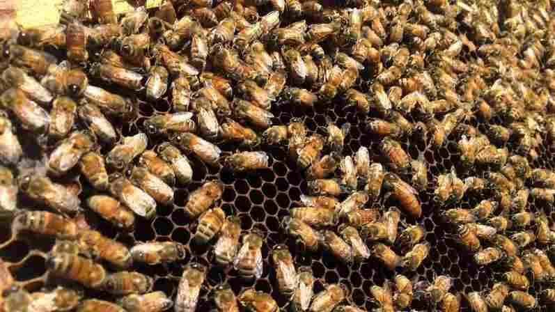 Drought Is Driving Beekeepers And Their Hives From California