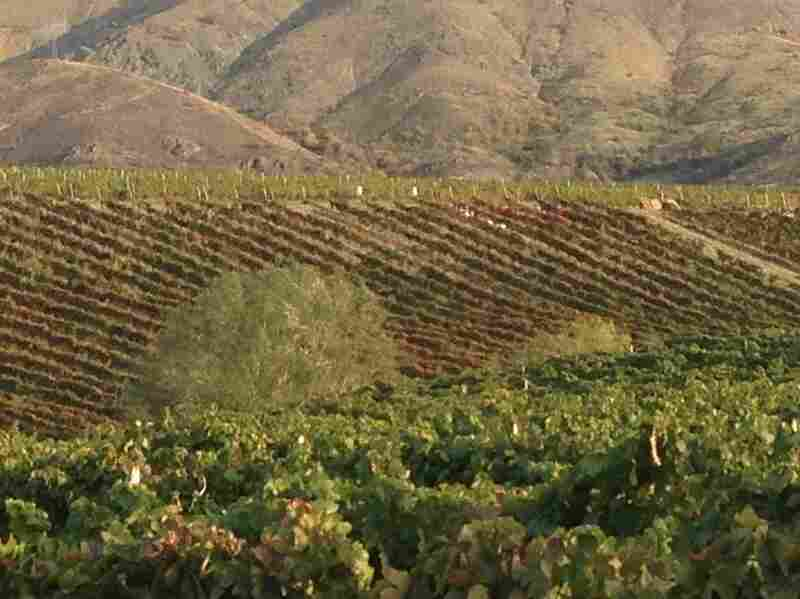 "One chapter in Cathy Huyghe's Hungry for Wine is devoted to the Vinkara vineyards in Turkey where ""hero wine"" is produced."