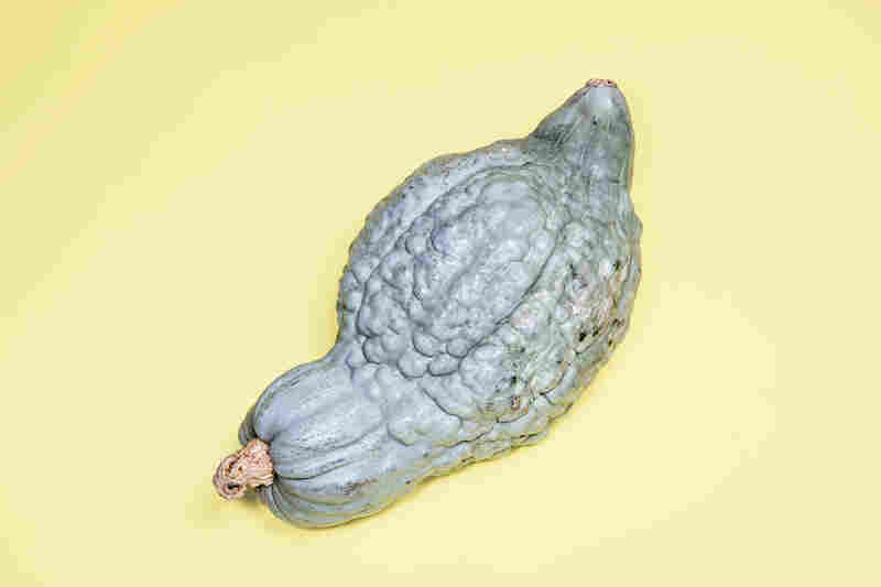 Blue Hubbard: This huge blue-gray squash was introduced in 1909 by Massachusetts seed entrepreneur James J.H. Gregory, who was also behind the cherry tomato.