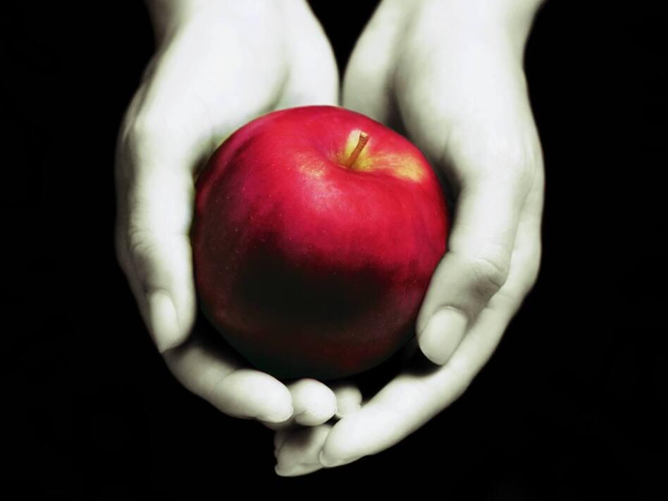 <em>Twilight</em> book cover. ( )