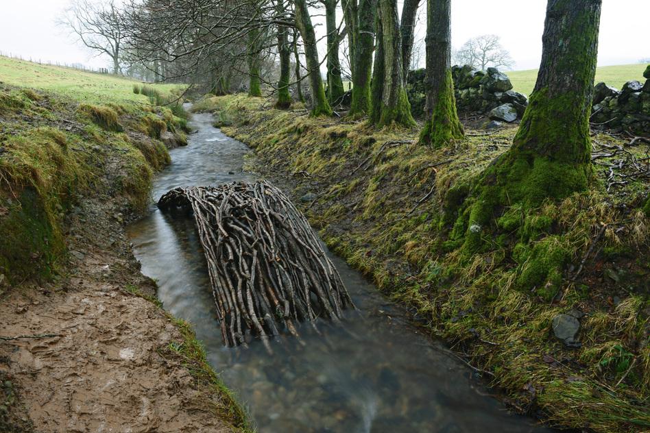 Alder branches form a bridge in a Dumfriesshire, Scotland, stream. (Jan. 17, 2014)