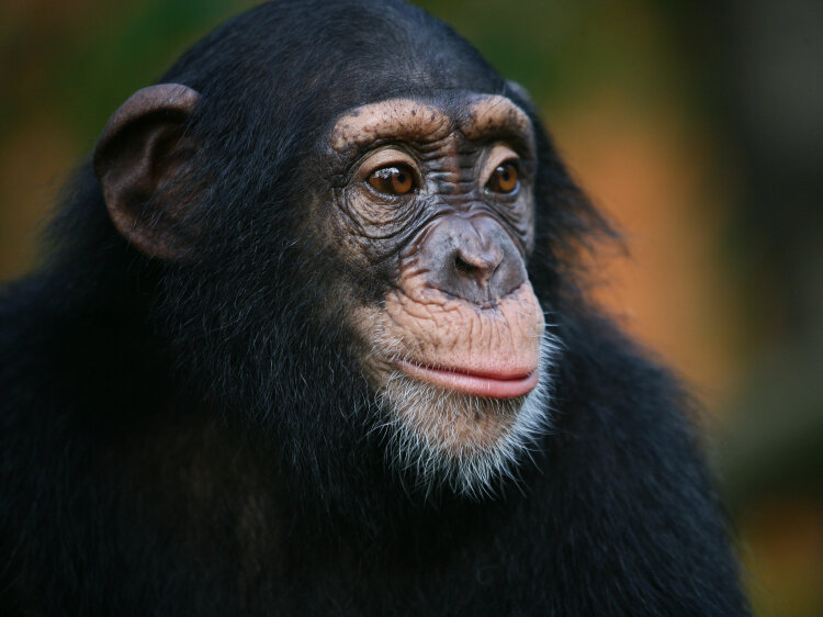 are we ex apes a story of human evolution 13 7 cosmos and