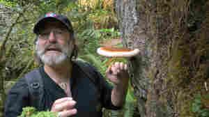 mushroom expert Paul Stamets.