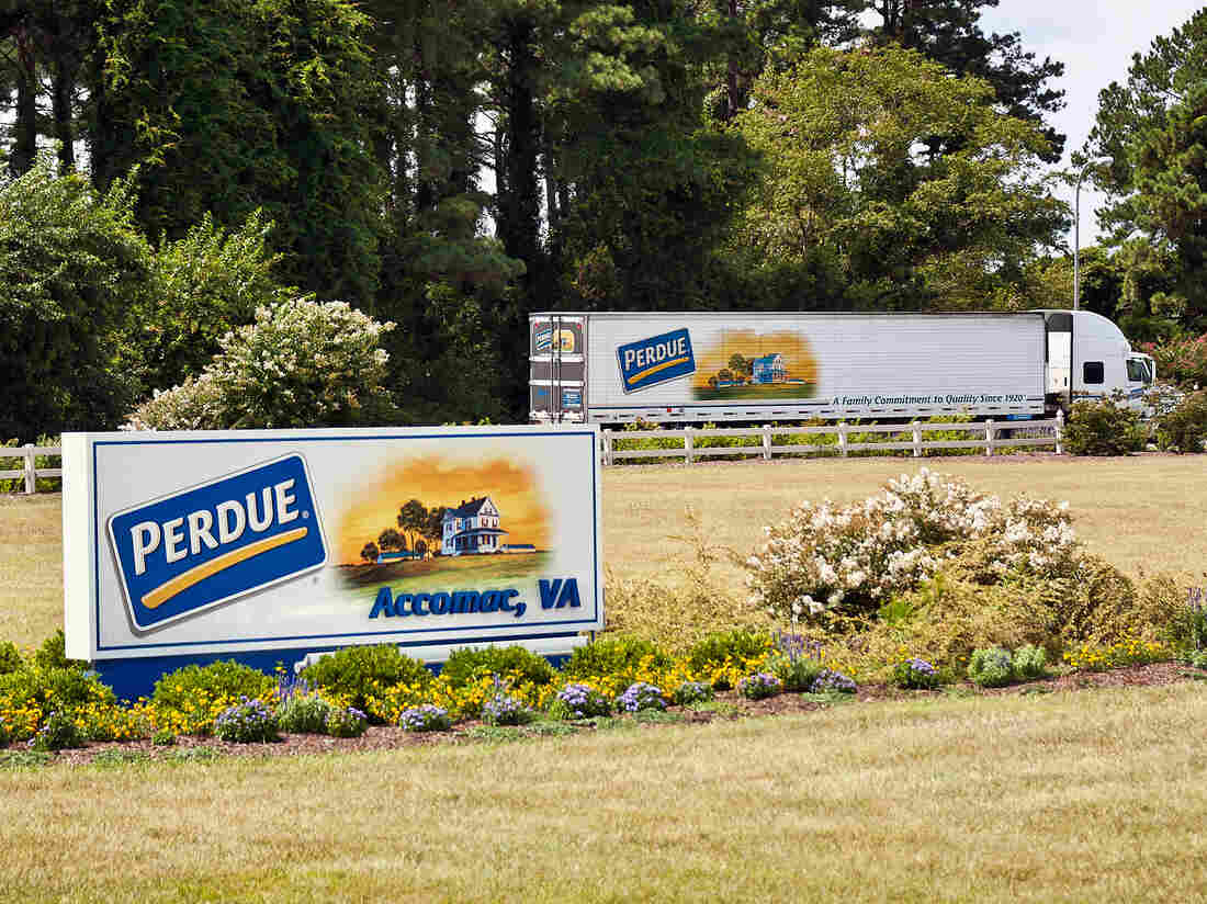 Perdue, the poultry giant, acquired the Niman Ranch name and reputation of raising animals without antibiotics in September.