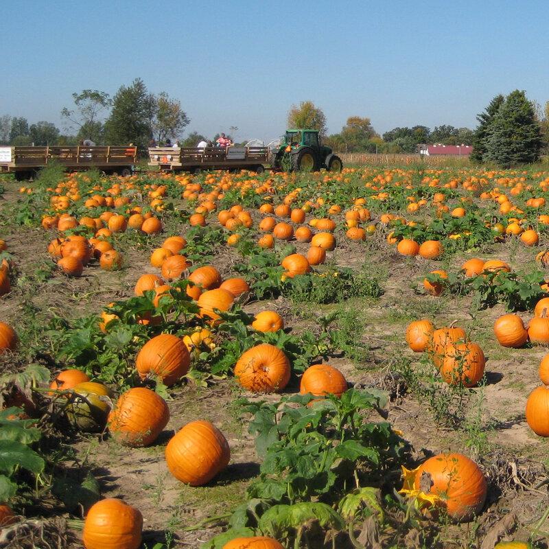 Do We Waste A Lot Of Pumpkins We Could Be Eating The Salt Npr