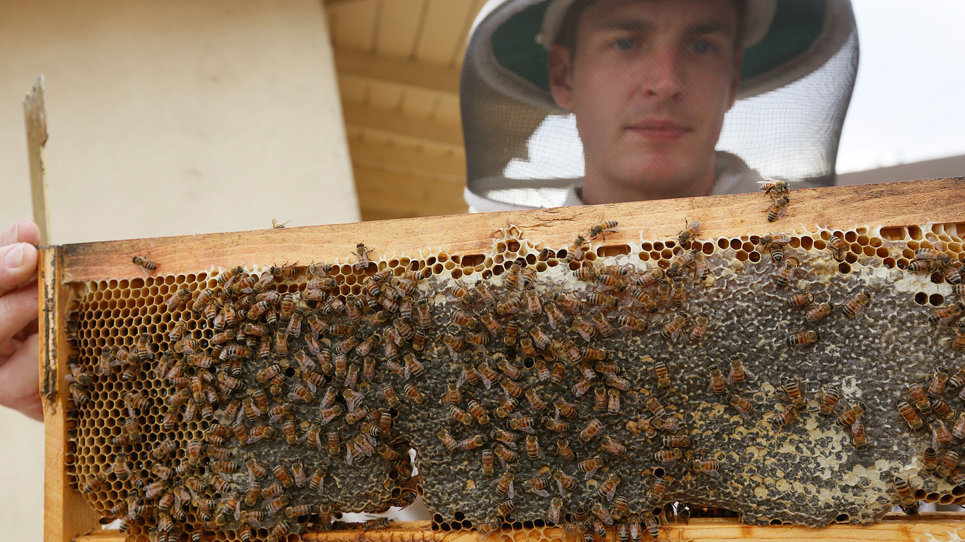 backyard beekeeping approved in los angeles the two way npr