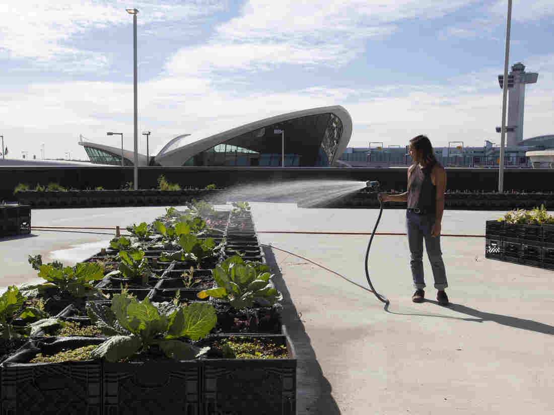 Katrina Ceguera tends JetBlue's farm outside Terminal 5 at New York's John F. Kennedy International Airport.