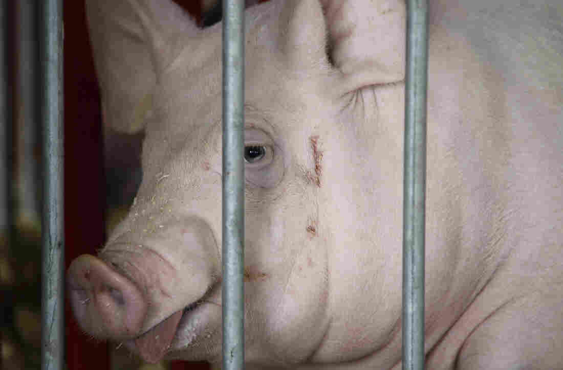 A Bureau of Prisons spokesman said the initial decision to take pork off the menu was spurred by the low ratings prisoners gave the product in surveys.