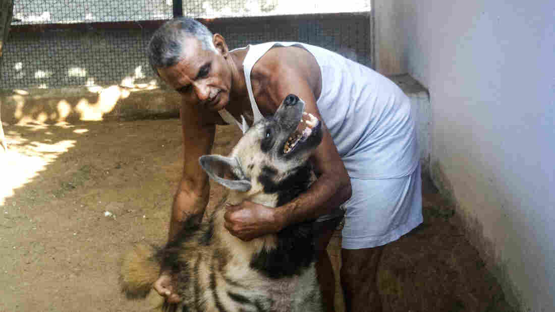 Prakash Amte, pictured with a hyena, founded a clinic and a school in a remote jungle in the center of India.