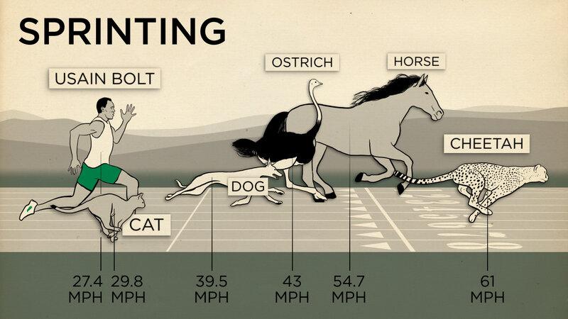 A Human Can Beat A Horse In An Endurance Race : Shots - Health News