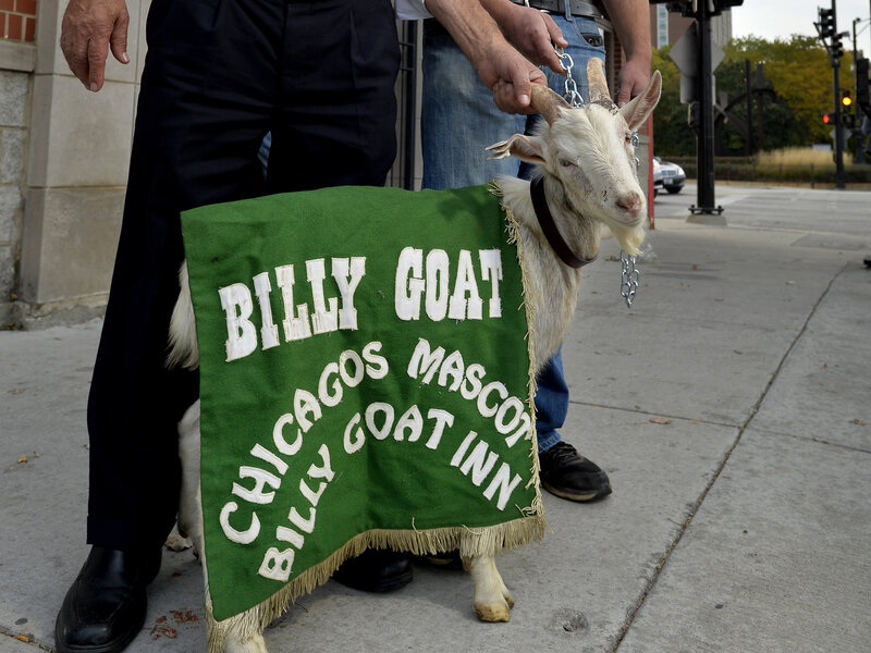 951c9efda9496 Cubs  Curse Of The Billy Goat And Other Superstitious Sports Tales ...