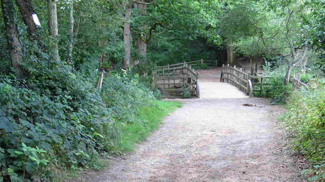 Generations of children have leaned over the side of this bridge for a game of Poohsticks in the real-life Hundred Acre Wood.