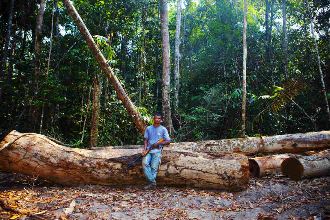 """Edivaldo """"Diva"""" de Souza, one of the tappers, stands in a clearing in the forest among trees that have been felled illegally."""