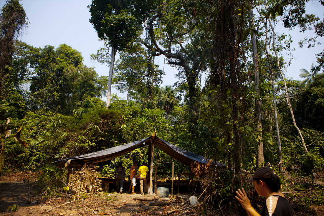 Giselda Pilker waves to the others that the illegal logging camp is clear to inspect.