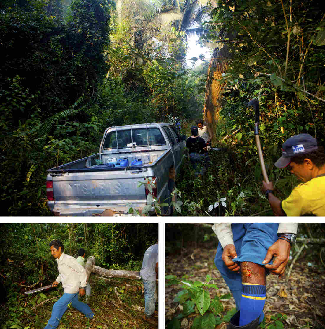 As the rubber tappers move deeper through the forest, clearing fallen logs from their path, they start seeing signs of illegal loggers.