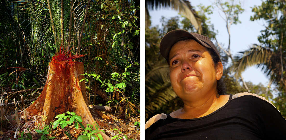 """""""To cut down a tree is like cutting out a piece of us,"""" says Giselda Pilker, crying as she stares at the trunk of an illegally chopped tree."""