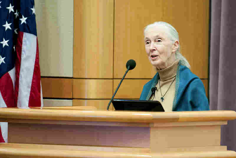 Jane Goodall spoke at the U.S. Department of State this week.