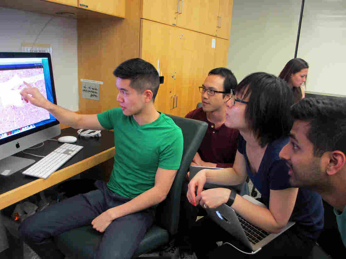 (Left to right) NYU medical students Brian Chao, Michael Lui, Hye Min Choi, and Varun Vijay take the team approach to learning about the anatomy of cells, and how disease can disrupt them. Analyzing big data sets is now a routine part of their studies, too.