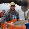 Mengapa Sukar Menyimpan Teluk Maine Cod?  Mereka Di Air Panas