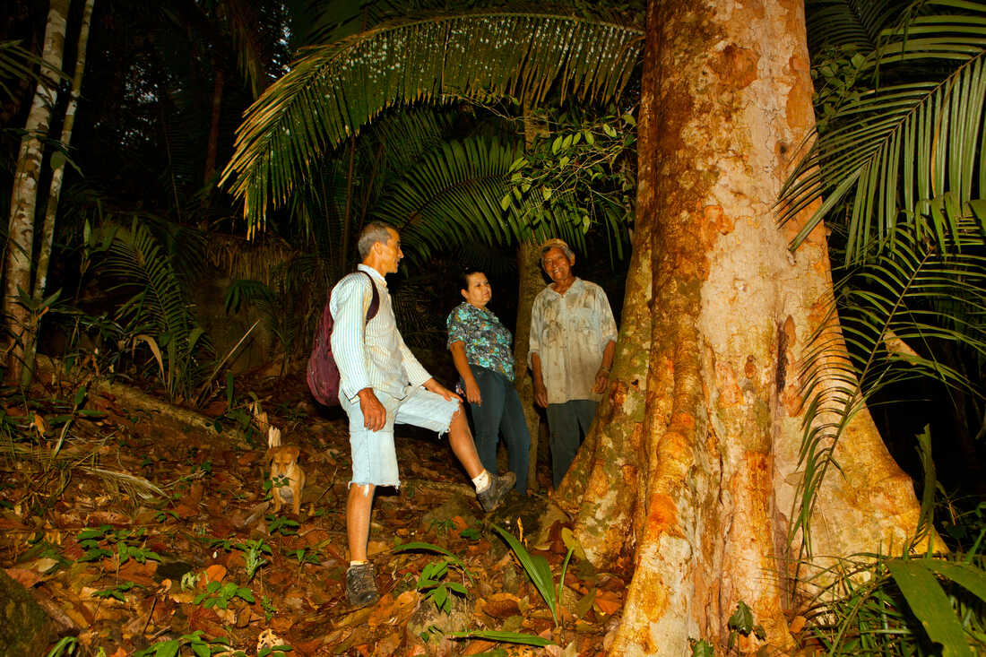 Trees like this, ones that are native to the Amazon region, are under constant threat from illegal logging.