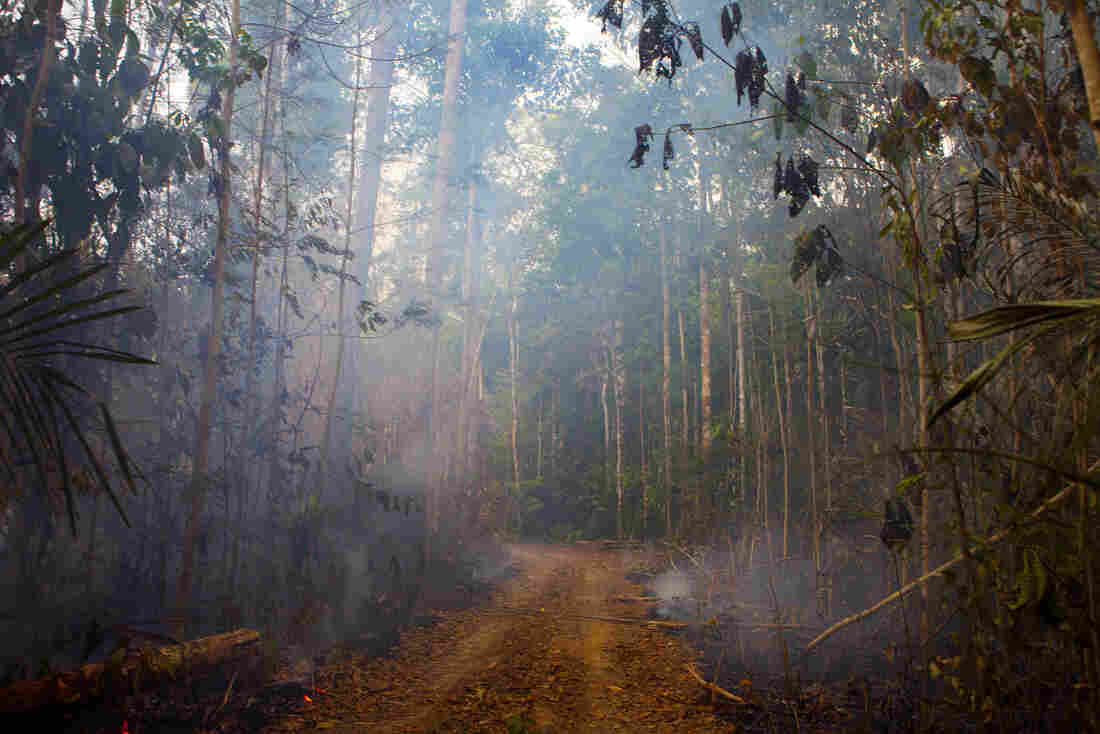In the western state of Rondonia, a patch of the forest burns near a small farm.