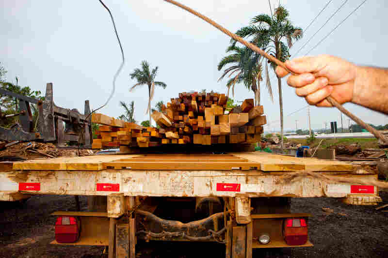 An NPR team joined Brazil's environmental police, the Ministry of Defense and other government enforcement agencies as they carried out a joint operation in the Jacunda National Forest in western Brazil. They seized timber that had been cut down by illegal loggers.