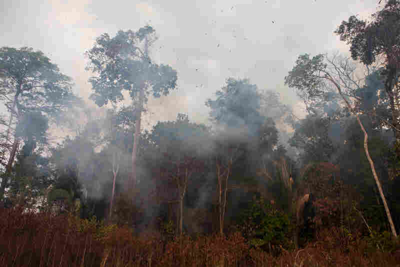 As the convoy prepares to enter the forest, the burning trees make it too hot to continue. The Brazilian environmental authorities were established to stop this kind of burning, but they say they lack the resources to have a major impact.
