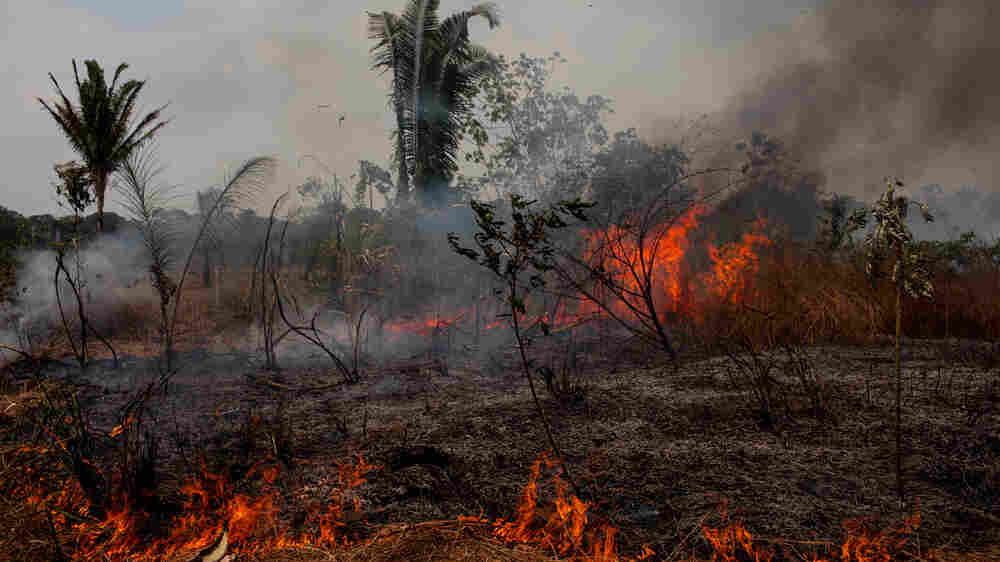 In The Amazon's Fire Season, 'You Either Burn Or You Starve'