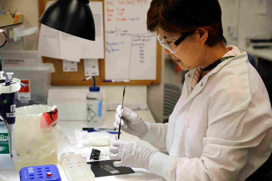 Microbiologist Mi Kang works to identify a strain of E. coli from a specimen in a lab at the Washington State Department of Health on Tuesday in Shoreline, Wash.