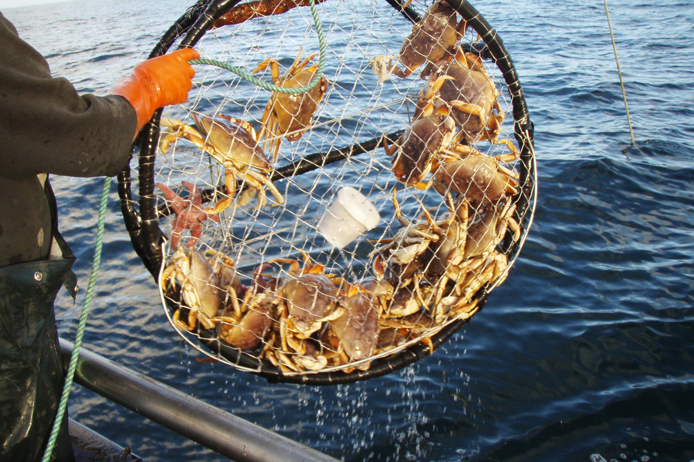 Why A Neurotoxin Is Closing Crab Season In California