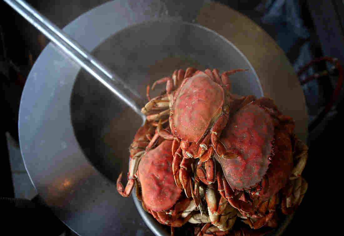 Freshly cooked Dungeness crab sits on a pot of boiling water at Nick's Lighthouse Restaurant in  San Francisco, Nov. 5, 2015.