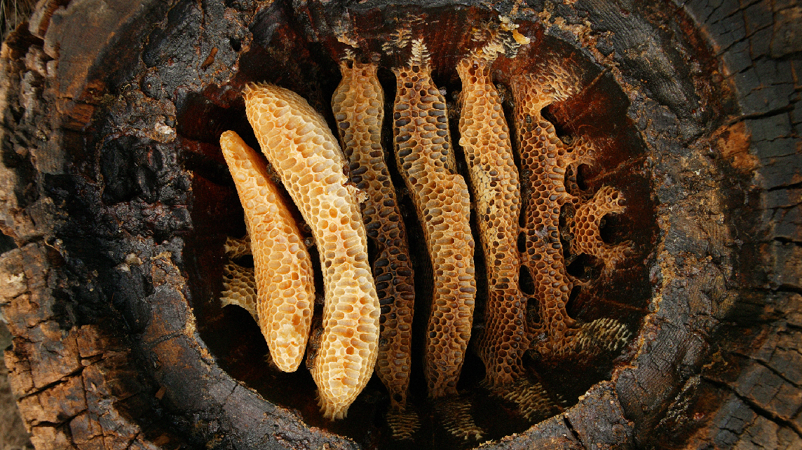 Farmers Have Been Enjoying The Fruits Of Bee Labor For 9,000 Years