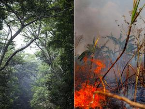 The rain forest in Rondonia, Brazil.
