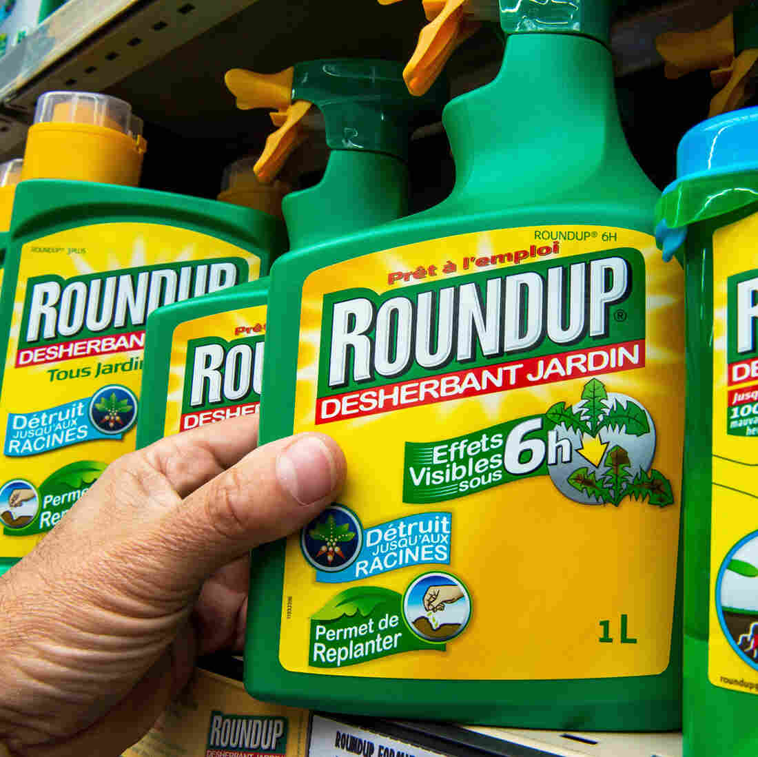 A bottle of Monsanto's Roundup herbicide in a gardening store in Lille, France. A group convened by the European Food Safety Agency reviewed the available scientific data on the chemical, also known as glyphosate, and concluded that it probably does not cause cancer.