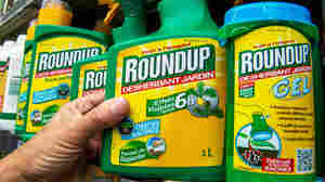 European Cancer Experts Don't Agree On How Risky Roundup Is