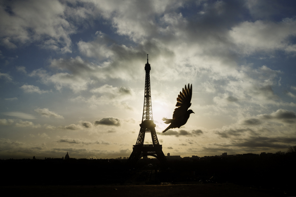 A bird flies in front of the Eiffel Tower, which remained closed on the first of three days of national mourning, in Paris on Sunday. (Daniel Ochoa de Olza/AP)