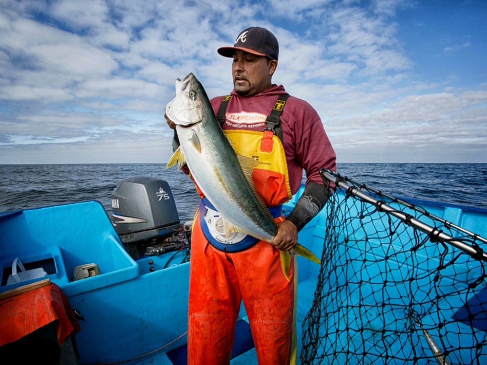 Entrepreneurs pitch sustainable seafood ideas investors for Fish market sacramento