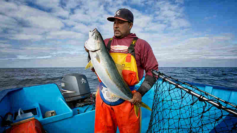 Entrepreneurs Pitch Sustainable Seafood Ideas; Investors Take The Bait