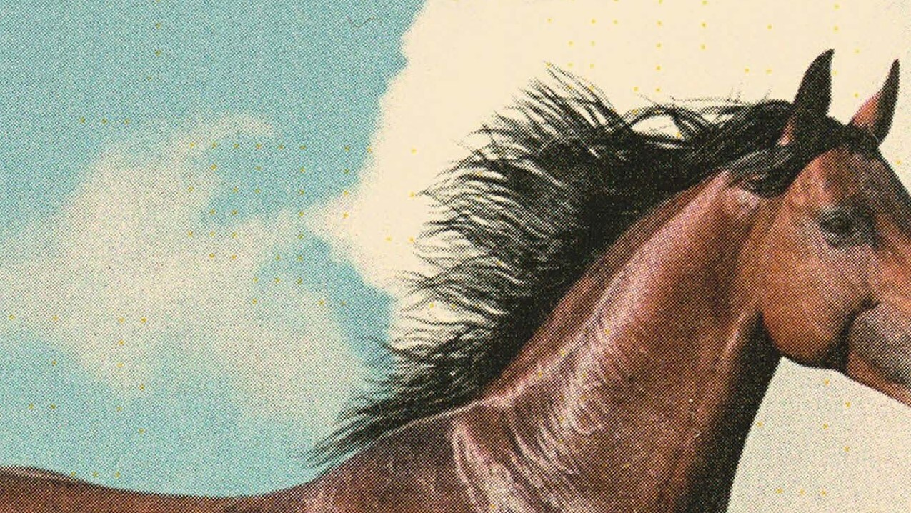 Gaitskill Spins A Swirling Tale Of Love, Delusion And Horses In 'The Mare'