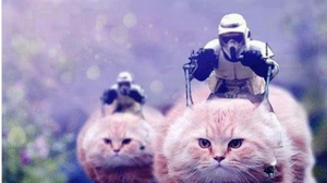 'We Haz Kittens!' And 4 Other Tweets From #BrusselsLockdown