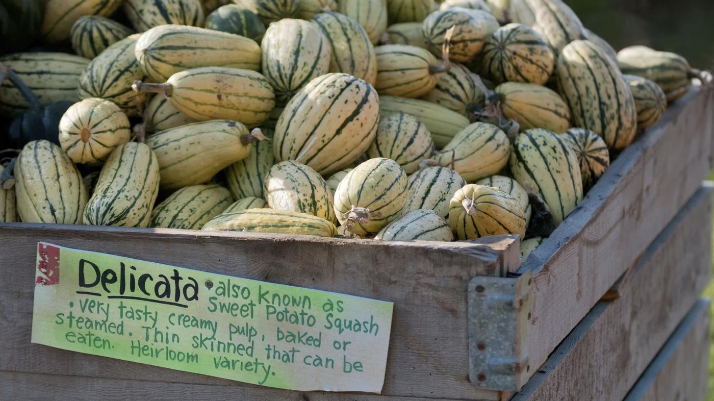 delicata squash how to tell when ripe