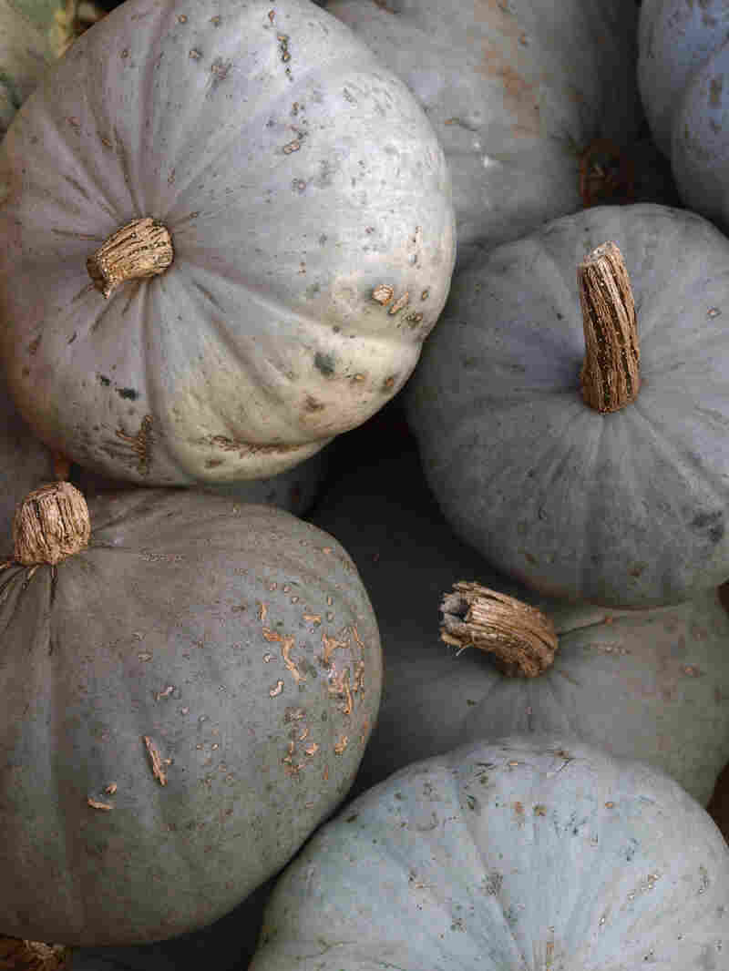 The behemoth Blue Hubbard squash can easily keep until March or April, says Michael Mazourek, a plant geneticist and breeder at Cornell University.