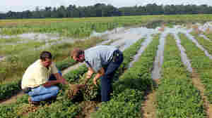 S.C. Farmers Burdened By Catastrophic Rainfall, Crop Losses