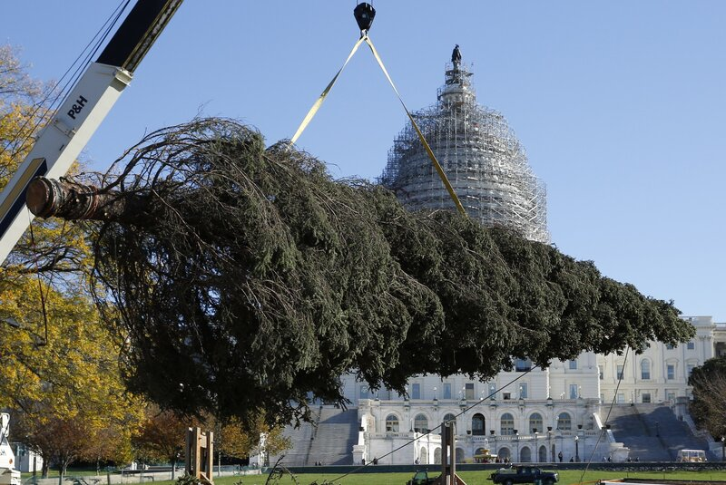 Capitol Christmas Tree.Alaska Ships A Capitol Christmas Tree With All Of The