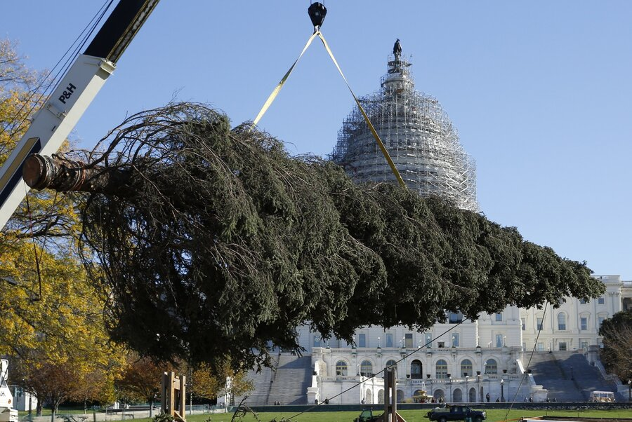 Alaska Ships A Capitol Christmas Tree With All Of The Trimmings : NPR