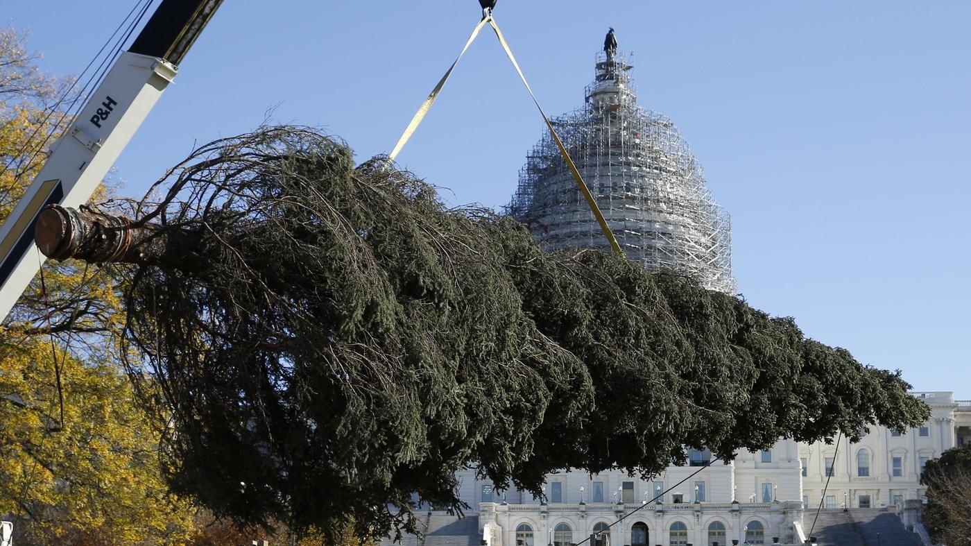 alaska ships a capitol christmas tree with all of the trimmings npr - Washington Dc Christmas Tree